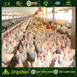 Большое Space Steel Poultry House в Панаме--ISO9001: 2008 (SSPH)