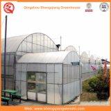 De Groene Huizen van de Plastic Film van de bloem/van het Fruit/het Groeien van Groenten met het Systeem van het Zonnescherm