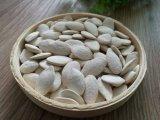 Snow White semilla de calabaza