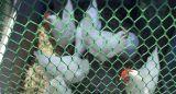 [هدب] [فلت وير مش] بلاستيكيّة لأنّ حماية