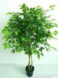 Piante e fiori artificiali dell'albero Gu-Mx-Wt-Ficus-180cm del Ficus