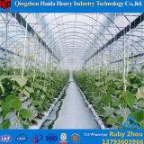 Multispan landwirtschaftlicher Film-grünes Haus für Tomate