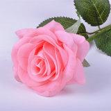 工場卸し売り乳液の実質の接触ローズの花