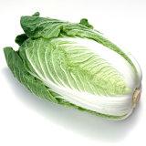 La nouvelle récolte de légumes frais- Chou chinois