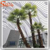 Kunstmatige Palm voor Indoor Decoration