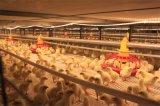 Structure en acier préfabriqué de poulet à la Chambre d'oiseaux /House (KXD-PCH2)