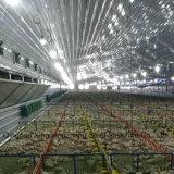 鶏のための家禽の鉄骨構造の農場
