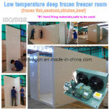 Baixo quarto congelado do congelador da temperatura profundamente - para o marisco, a galinha etc.