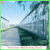 Serre commerciali di coltura idroponica di buona qualità con il sistema di Irragation del gocciolamento