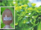 Het Poeder van 100% Ginkgo Biloba voor anti-Veroudert