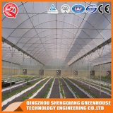 Chambre verte de film plastique végétal de Graden d'agriculture