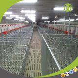 Système alimentant automatique à chaînes en gros pour l'agent du besoin de volaille de porc