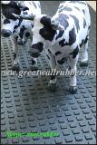 Stuoia della mucca, stuoia antiscorrimento, stuoia animale, piccola stuoia di gomma quadrata