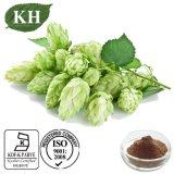Flavonoids 4%, CAS Nr van het Uittreksel van de Hop van Kingherbs.: 8016-25-9
