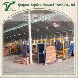 De la fábrica de Shandong, papel de la melamina Frente de lujo de madera contrachapada para Muebles y Decoración