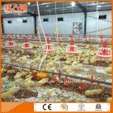 Le matériel automatique d'alimentation de la volaille chez le poulet a jeté de l'usine