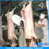Maiale Slaughtering Equipment con Layout Drafting