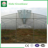 野菜か庭または花または農場のマルチスパンのフィルムの温室