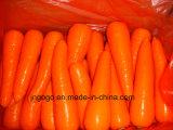 carota eccellente rossa fresca 150-200g