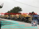 Individu automatique de la Chine Manufaturer 3.5m3 chargeant le camion concret de mélangeur de colle