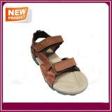 نمو [هيغقوليتي] خف أحذية لأنّ عمليّة بيع