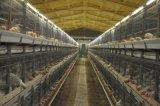 A exploração agrícola de /Chicken da casa de galinha com tipo camada de H da galinha prende Hld5300