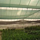 紫外線の農業の新しいPEの陰のネット(YHZ-SDN02)