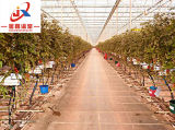 Интеллектуальная стекла выбросов парниковых газов для посева томатов