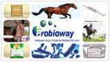 Hemicellulaseの混合の概要の繁殖の馬の子馬のセルラーゼおよび酵素