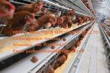 De Hete Gegalvaniseerde Kooi die van de beste Prijs & van de Goede Kwaliteit de Kooi van de Kip van het Ei (een Type) leggen