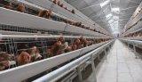 家禽の農夫のための自動層の鶏のケージシステム