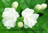 Jasmine perfume desodorante de la litera del gato Ronda (003)
