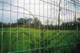 Recinzione olandese rivestita della rete metallica del PVC