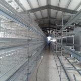 Gaiola quente da galinha da camada do equipamento da exploração avícola da venda