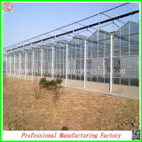 Cooling Systemの環境のPolycarbonate Sheet Hydroponic Greenhouses