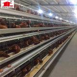 [بيرد كج] رخيصة/دجاجة يتوالد [كوب] قفص/يلحم دجاجة قفص [وير مش] لأنّ عمليّة بيع