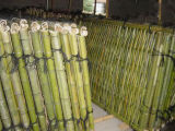 Nuevos productos Prime Quality Folding Bamboo Fence