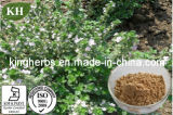 Het Chinese Traditionele Uittreksel van de Thyme van het Kruid