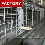 감금소 30 년 공장 공급 건전지 층 보일러 닭