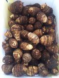 Neues Getreide-frische Yamswurzel mit gutem Preis für den Export