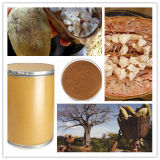 最もよい酸化防止剤の補足/Baobabのフルーツのエキス