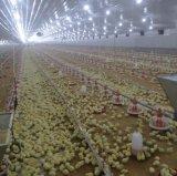 دواجن معدّ آليّ لأنّ دجاجة يرفع تجهيز
