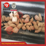 Pomme de terre/raccord en caoutchouc/radis/nettoyage de lavage d'oignon/manioc et machine d'écaillement