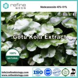 Meilleur prix d'alimentation de l'usine Gotu Kola, Extrait de Centella asiatica, Extrait de Centella asiatica en poudre, Madecassoside