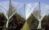 HDPEの反あられは3mx100m 2.8X100mをブドウ園の4mx100m得る