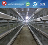 La volaille posent le matériel de ferme pour la ferme de poulet d'Afirca