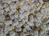 O alho branco fresco Globalgap certificou
