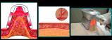Nieuw Lichaam die van de Vette Machine van Cryolipolysis van het Beheer van het Gewicht van de Vermindering de contouren aangeven