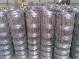 Rete metallica file rete fissa del pascolo per l'azienda agricola