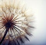 Einfache bunte Blumen-handgemachte Ölgemälde-Ausgangsdekoration